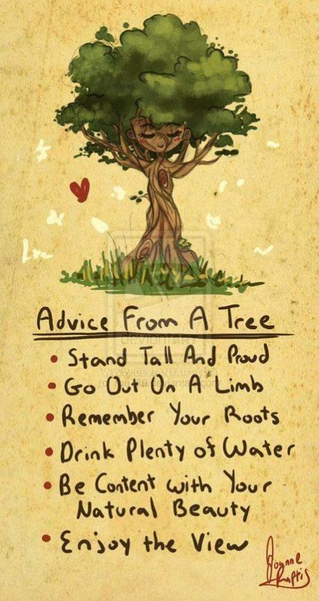 Solid Advice From a Tree